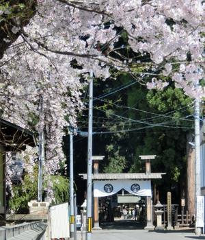 法音寺の桜と廟所